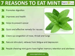 13 impressive benefits of mint organic facts