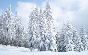 hq 1920x1200px resolution snow trees 889536 feelgrafix