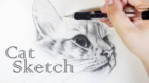 cat sketch realistic cat drawing draw a cat 貓素描手繪畫