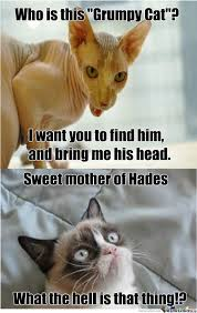 Angry Cat Good Meme - 40 grumpy cat memes that you will love fallinpets