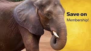 membership sale zoo atlanta