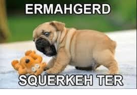 Ermahgerd Animal Memes - ermahgerd squerkeh ter ermahgerd meme on me me