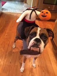 Dog Spider Halloween Costume Large Dog Halloween Costumes Large Dog Halloween Costumes