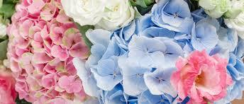 flower shop coralville florist flower delivery by mint julep flower shop