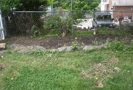 privacy shrubs captain ron u0027s lawns u0026 landscaping inc