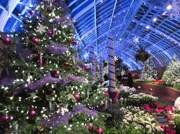 phipps conservatory christmas lights phipps conservatory winter flower show pittsburgh pa interesting