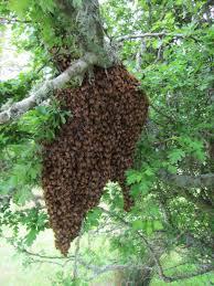 lindsay u0027s apiaries frank and mary ann lindsay