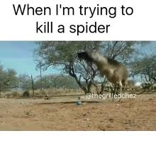 Kill Spider Meme - when i m trying to kill a spider the grilledchez meme on me me