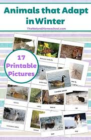 1252 best montessori printables images on pinterest montessori