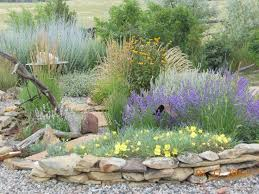 Drought Tolerant Backyard Ideas Best 25 Drought Resistant Landscaping Ideas On Pinterest