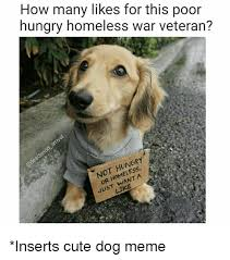 Cute Dog Memes - how many likes for this poor hungry homeless war veteran 01 mel a
