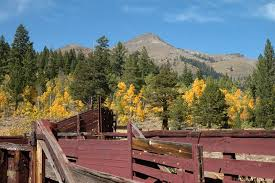 hope valley california alive fall color u2022 lake tahoe guide