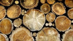 Wallpaper That Looks Like Wood by Wallpaper That Looks Like Wood 08 0f 10 With Wood Timber Hd
