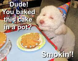 Birthday Cake Dog Meme - birthday cake dog meme 28 images dog birthday quotes quotesgram