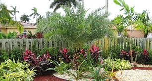 common landscaping plants front yard modern common landscaping