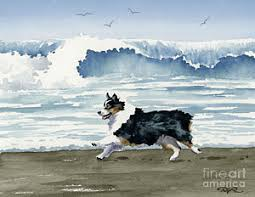 1 australian shepherd australian shepherd paintings page 6 of 10 fine art america