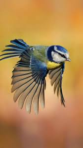 best 25 birds in flight ideas on pinterest pretty birds blue