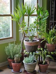 Our Favorite Plants How To by Madaline Sparks Teaches Us How To Overwinter Our Favorite Outdoor