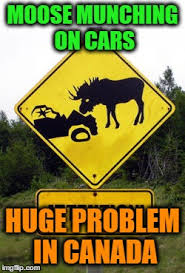 Moose Meme - image tagged in memes signs moose meme virals much memes for