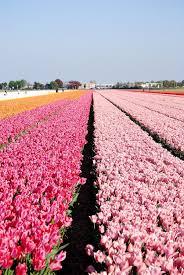flower places keukenhof the garden of europe netherlands tourism