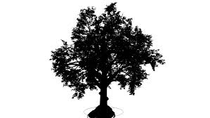 broadleaf deciduous tree silhouette of animated tree is swaying