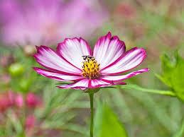 Flowers For Morning Sun - 12 best annual flowers for full sun