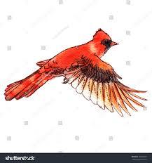 watercolorstyle vector illustration red cardinal bird stock vector