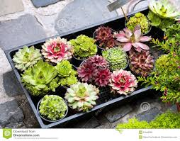 various succulents plants stock photo image 54946958