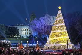 christmas lights tree wrap christmas light tree christmas tree lights wrapping branches