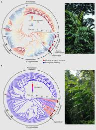 frontiers global diversification of a tropical plant growth form