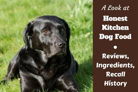 how to remove pet stains and odors accidents do happen