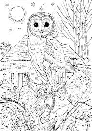 owl coloring getcoloringpages