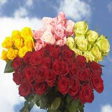 wholesale roses and color roses global