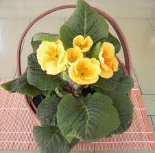 white flowering house plants interior design