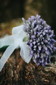 160 best lavender flower power images on pinterest lavender