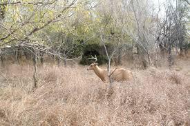 Reflective Deer Blind Anatomy U2013 The Weaponed Woman