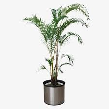 plante de chambre la chambre de plantes des plantes plante d intérieur image png