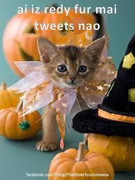 Animal Halloween Costumes 131 Halloween Cats U0026 Dogs Images Animals