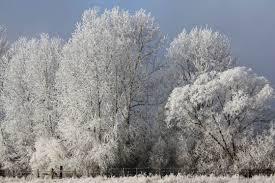 the magic of nature 35 dazzling snowy tree photos designbeep