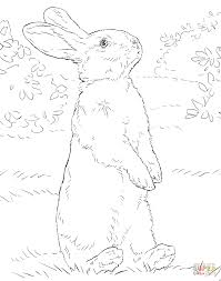 book related coloring pages