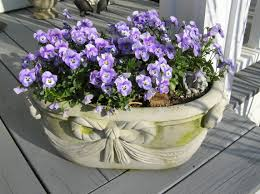 native plants of alabama that beautiful purple plant blog archives