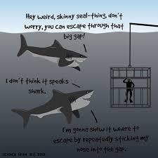 Shark Meme - 40 most funniest shark meme pictures and photos