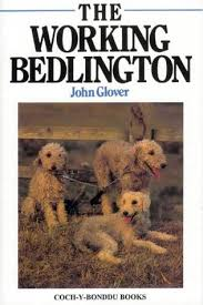 bedlington terrier genetic disease terrierman u0027s daily dose the working bedlington