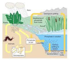 biogeochemical cycles bioninja
