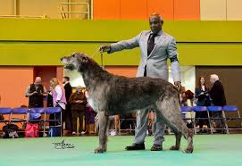 affenpinscher crufts 2016 judges a e world dog show leipzig 2017 wds2017 de