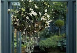 How To Arrange Indoor Plants by Primrose U2014growing Primrose Primula Indoors