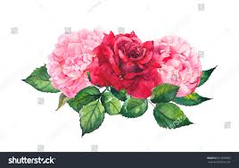Peony Flowers Pink Peony Flowers Red Roses Watercolor Stock Illustration
