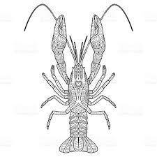 vector hand drawn crawfish drawing for coloring book stock vector