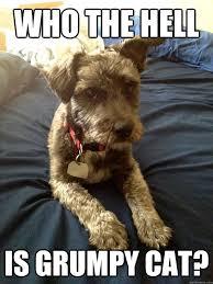 Grumpy Dog Meme - who the hell is grumpy cat grumpy dog quickmeme