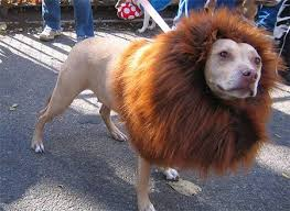 Lion King Halloween Costumes 101 Dogs Costumes Images Animals Animal